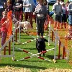 2014 05 04 Walkern Fair John Pearson 193