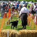 2014 05 04 Walkern Fair John Pearson 198